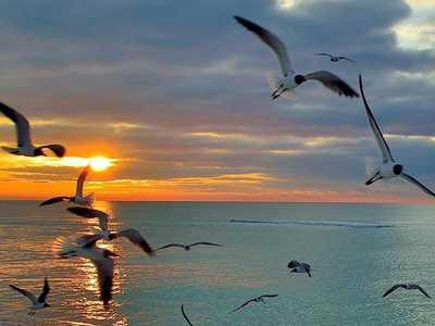 seagulll